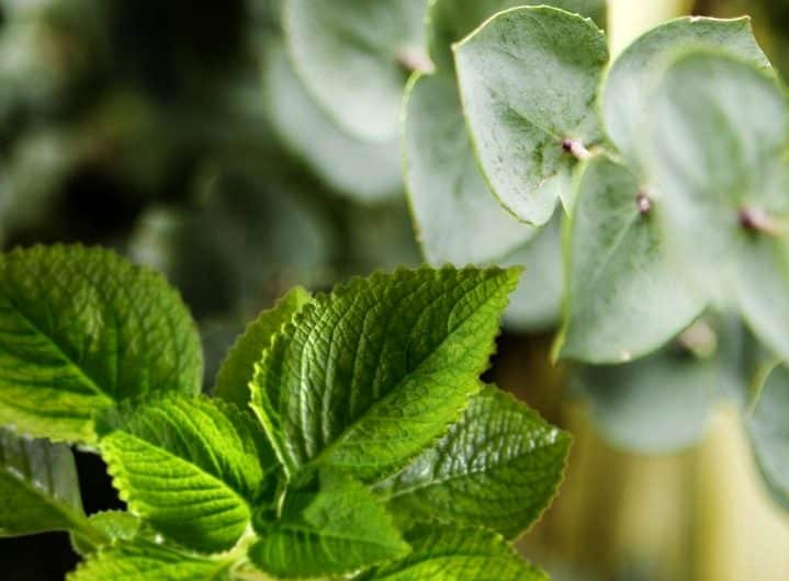 8 remédios naturais para sinusite